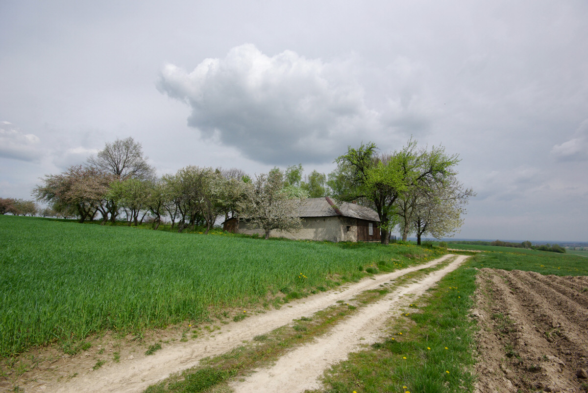 okolice Bodziejowic, Zagórza i Dzibic