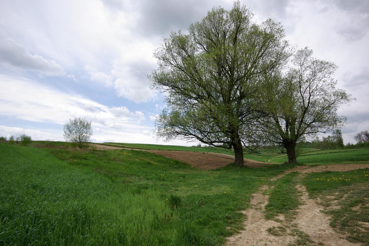 okolice Dzibic