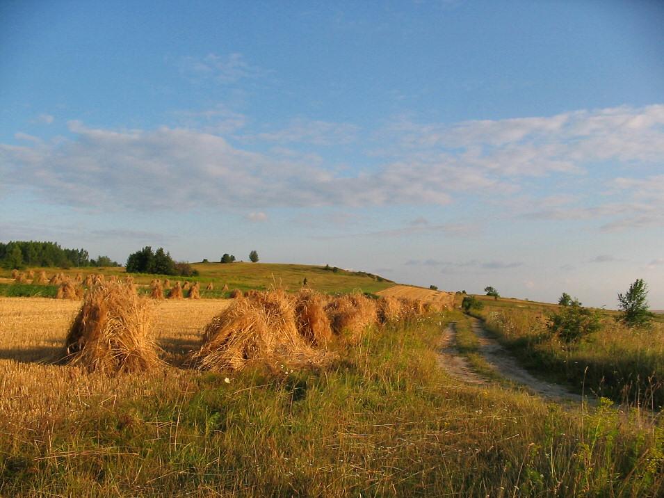 Okolice Kotowic