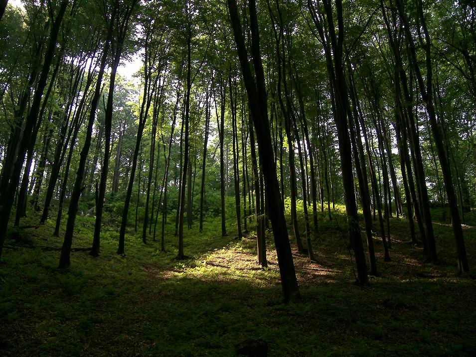 Dolina Wiercicy