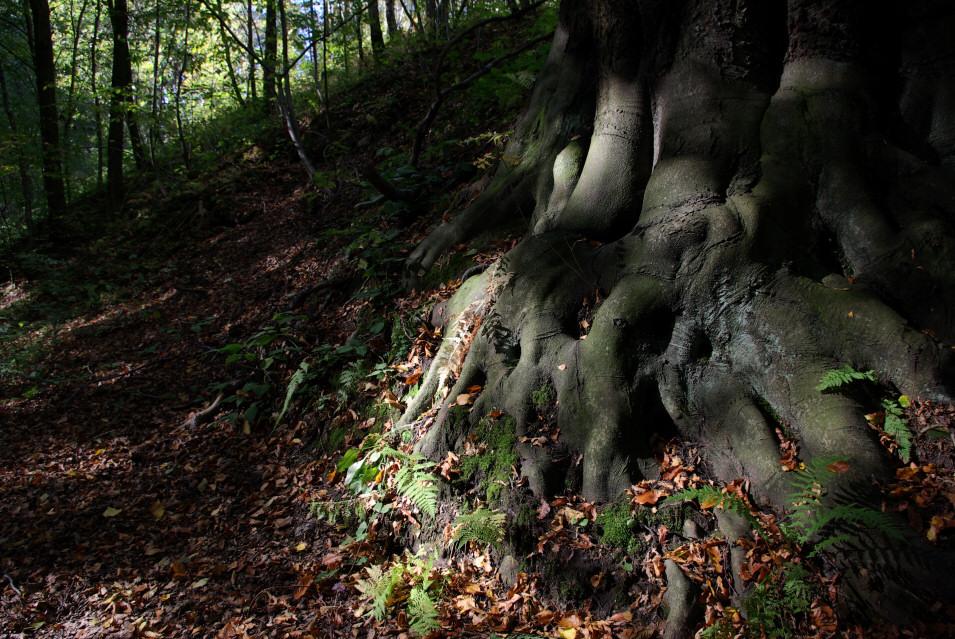 Wąwóz Tarnówki