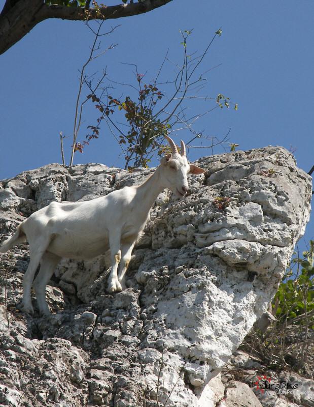 Kozy na Górze Zborów