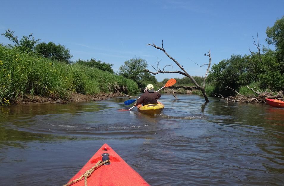 Czerwcowy spływ kajakowy rzeką Pilicą na odcinku Maluszyn - Krzętów