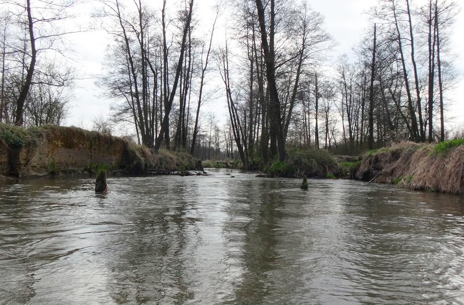 Wiosenny spływ kajakowy rzeką Pilicą, Szczekociny - Przyłęk