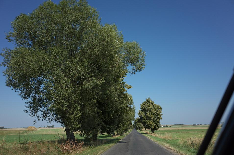 Kruszyna - Trzebce