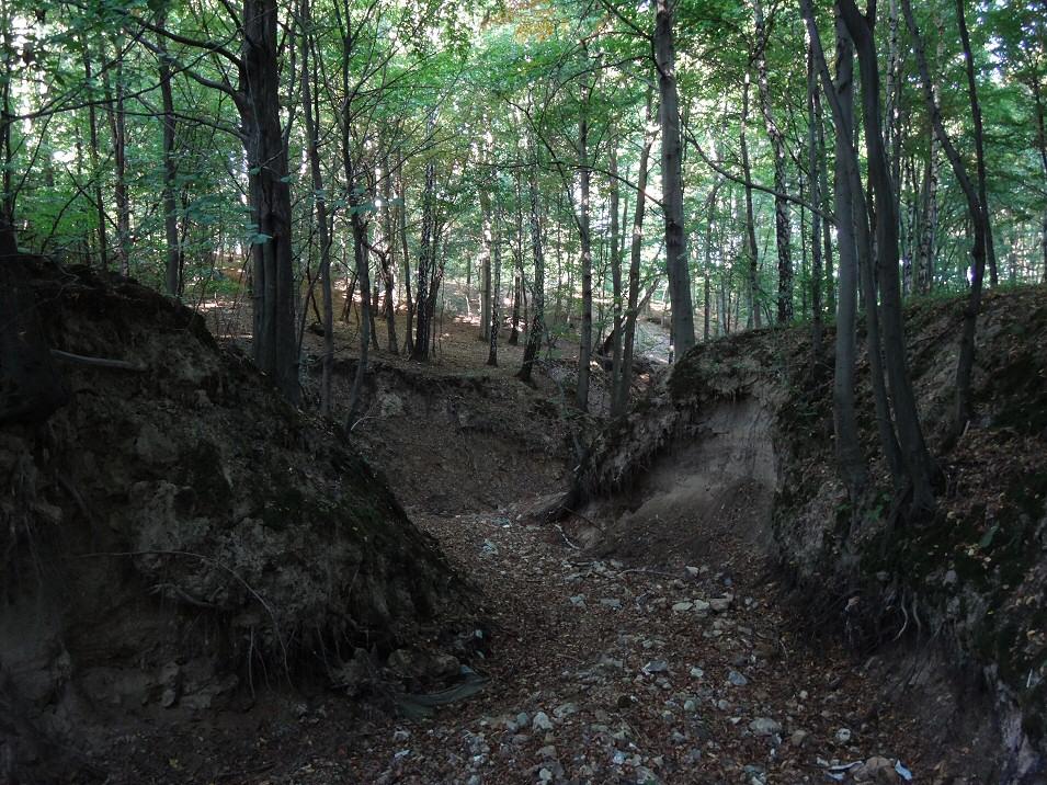 okolice Dąbrowna