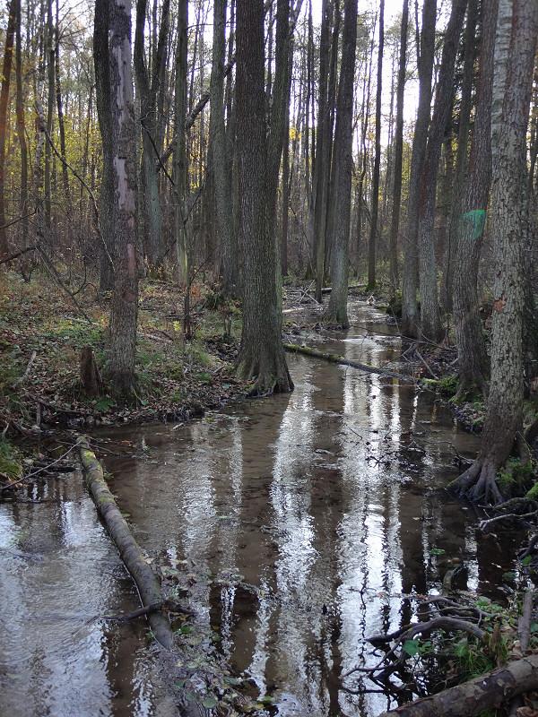 Natura 2000 ostoja Źródła Rajecznicy
