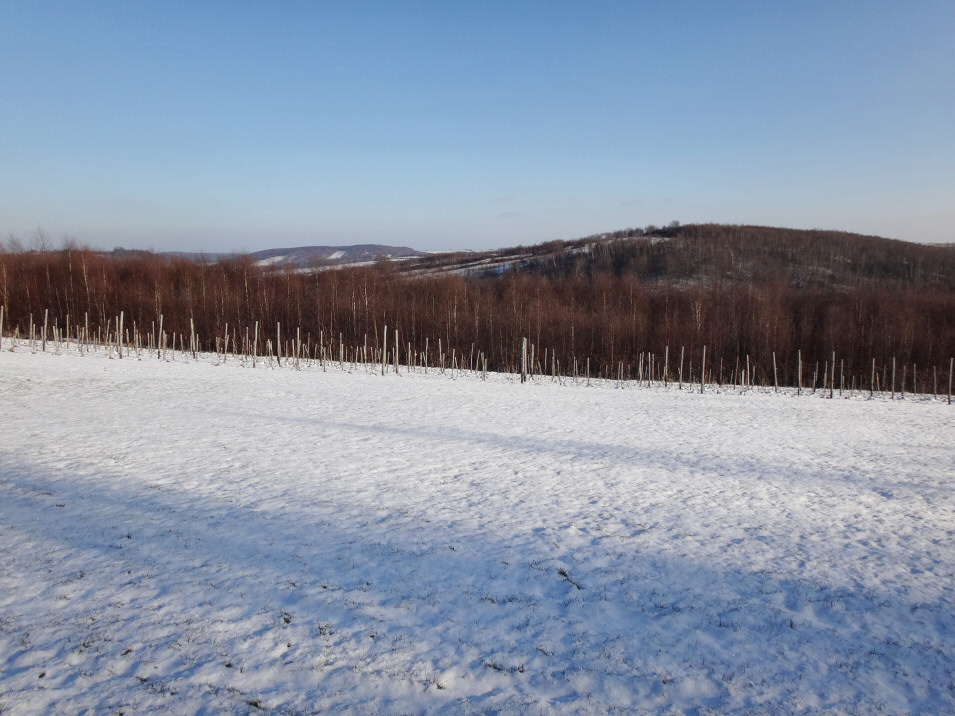 okolice Gorzkowa / Ludwinowa