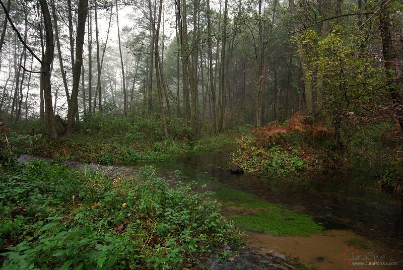 Potok Wodząca k/Kostkowic