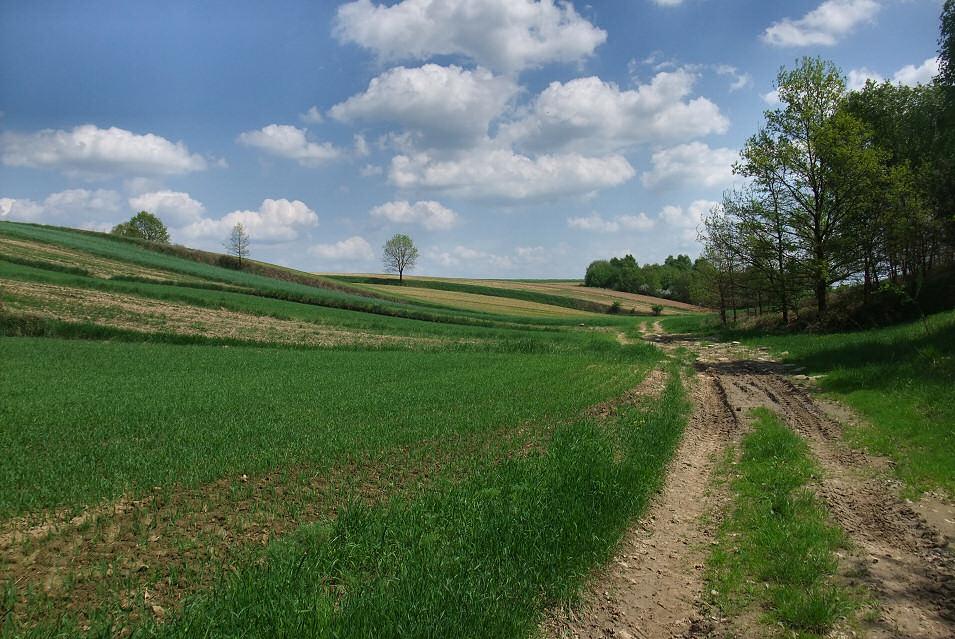 okolice Tomiszowic