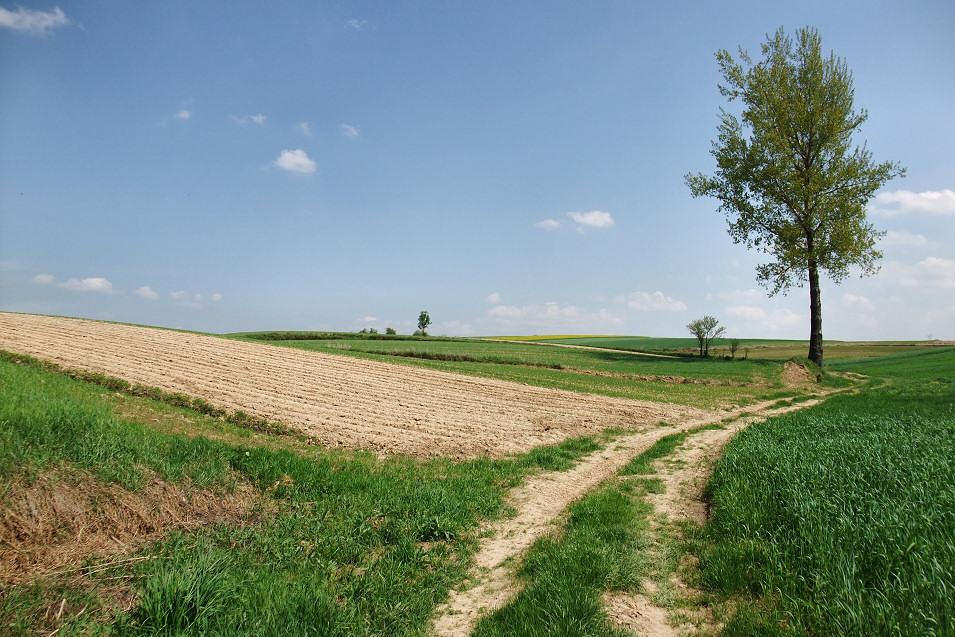 okolice Kacina