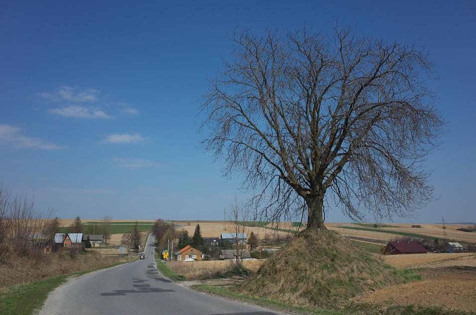 Wyżyna Miechowska, Cieplice
