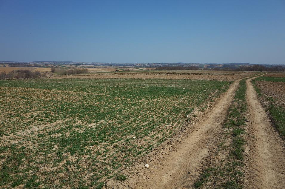 Wyżyna Miechowska, okolice Rzeżuśni