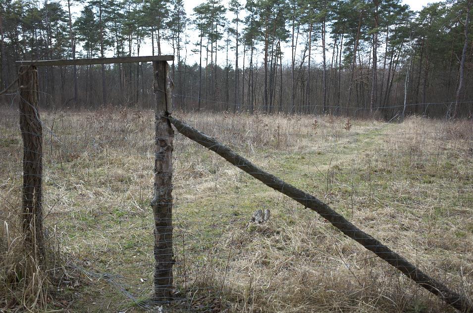 Wyżyna Miechowska, Zagaje