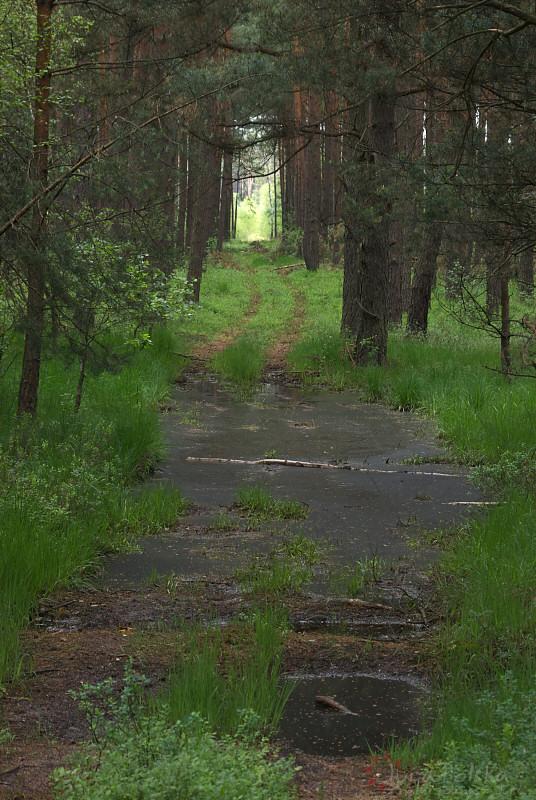 Lasy Pradelskie
