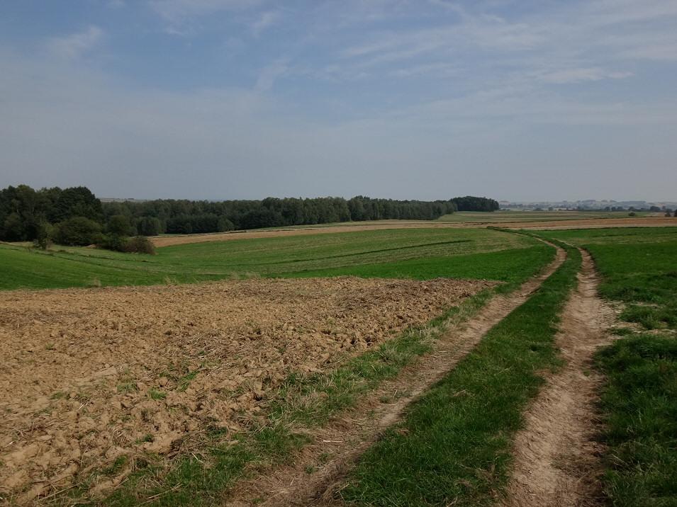 Krajobraz Progu Lelowskiego