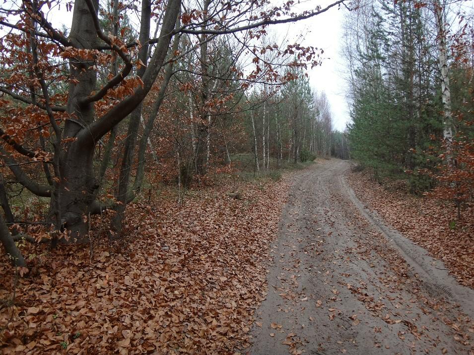 W lasach poniżej zachodniej granicy Jury K-Cz.