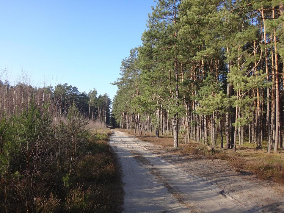 okolice Żarek