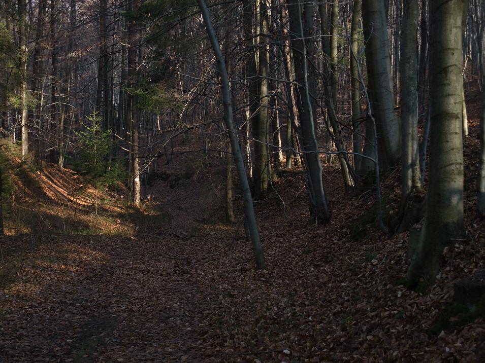 Las Bukowiec, Giebło