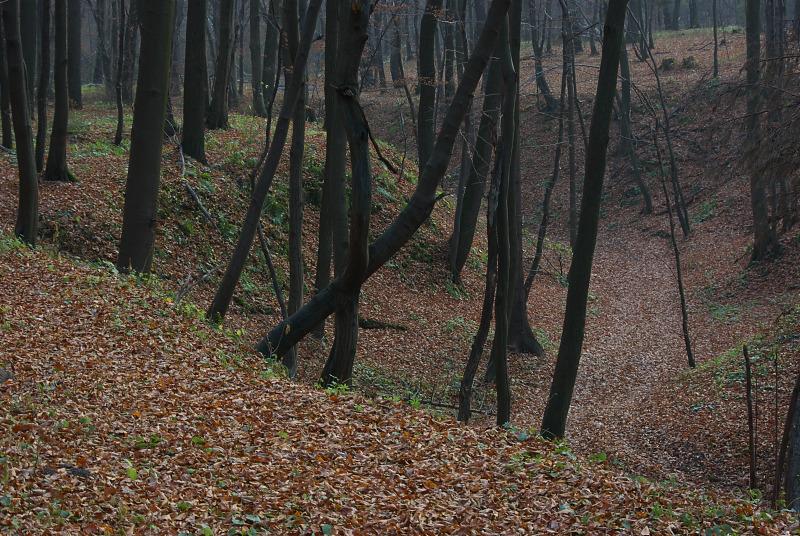 Dworski Las