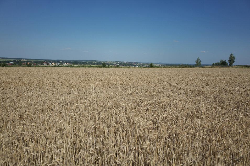 okolice Żelisławic