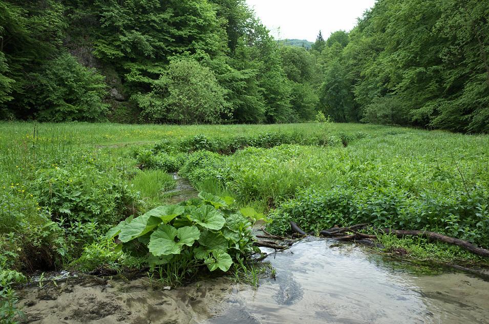 Dolina Sąspowska, Ojcowski Park Narodowy