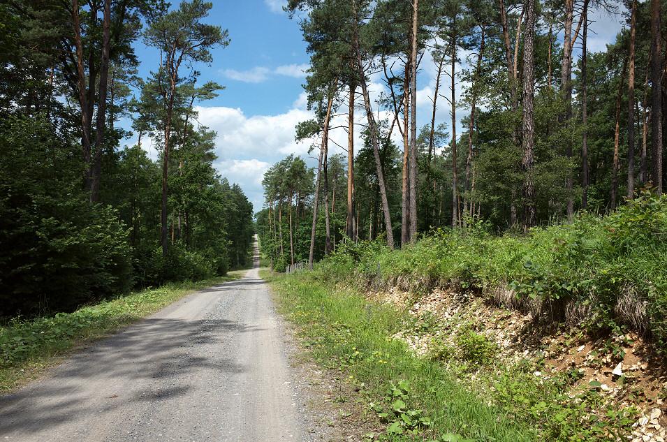 okolice Leśniczówki Bizoręda