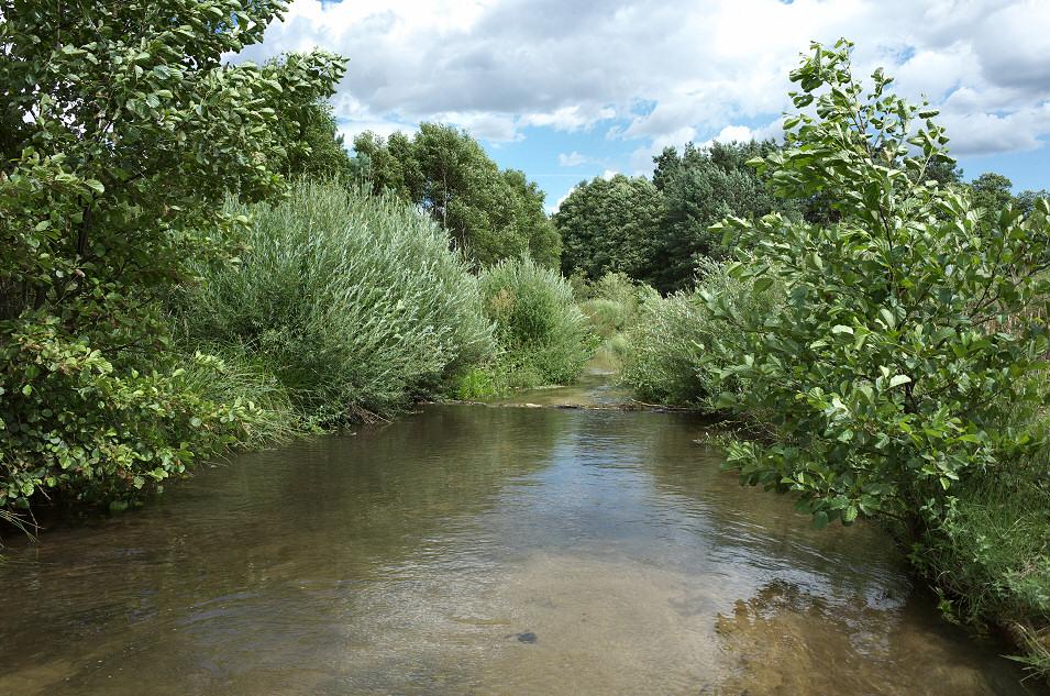 potok Wodząca