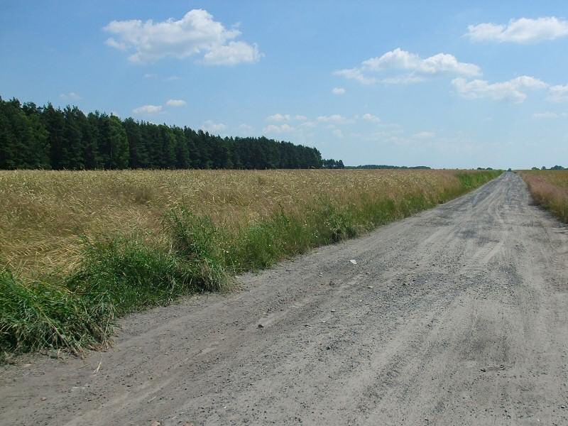 Droga do Rokitna - Rowerem do Sędziszowa