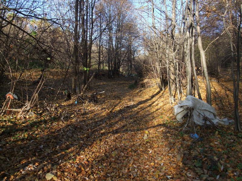 Dolina Pod Damiakiem
