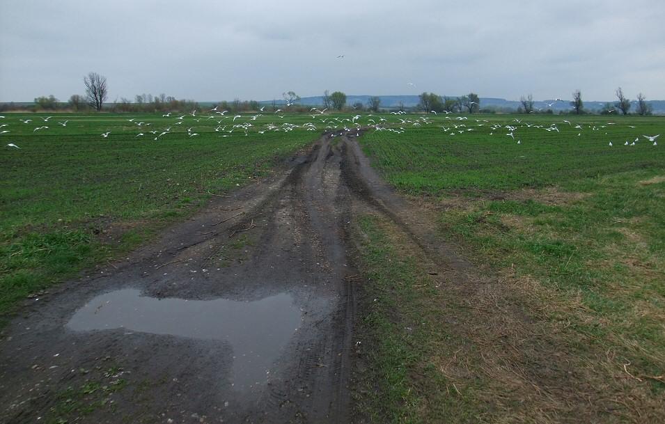 Dolina Nidy