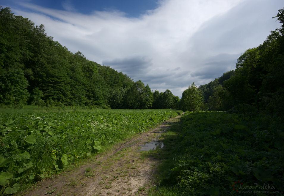 Dolina Racławki