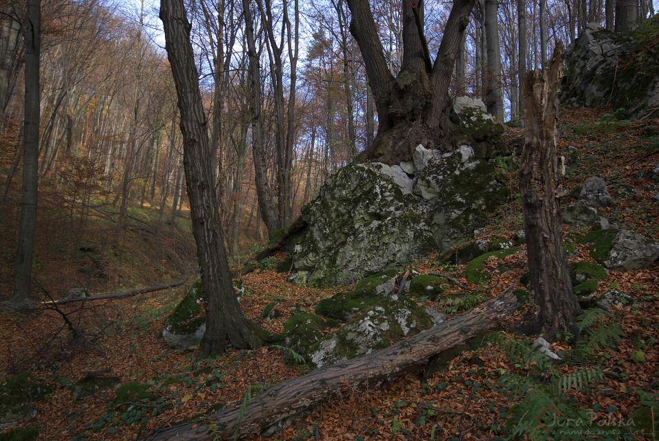 Dolina Racławki, Wąwóz Stradlina