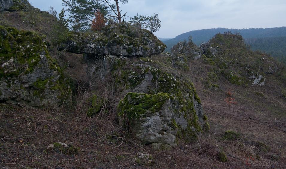 Wycinka na Grzędzie Mirowskiej - 2015r.