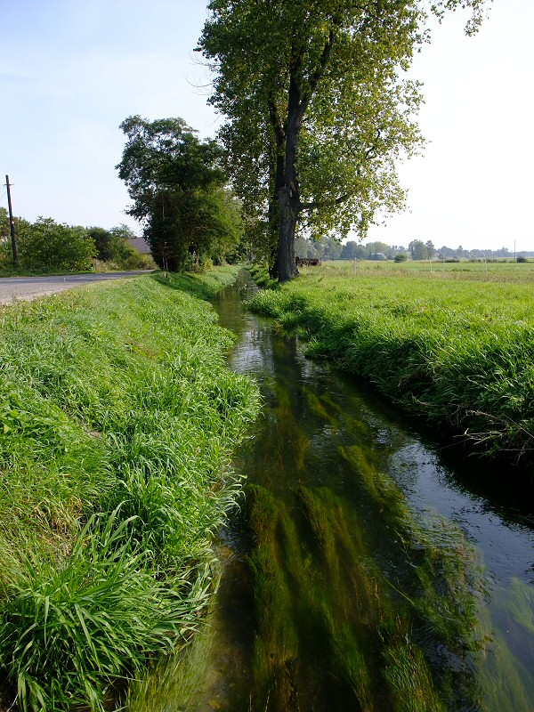 rzeka Pilca w Wierbce