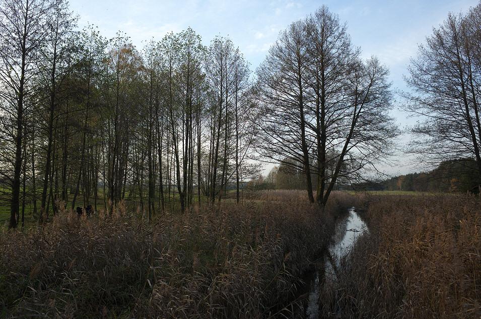 Dolina Żebrówki