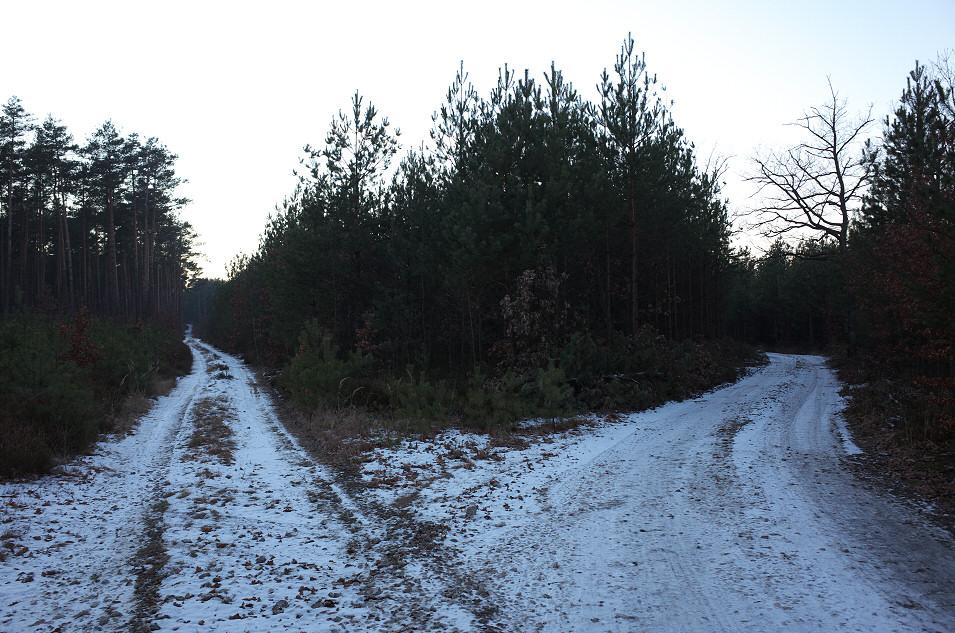 Lasy Pradelski