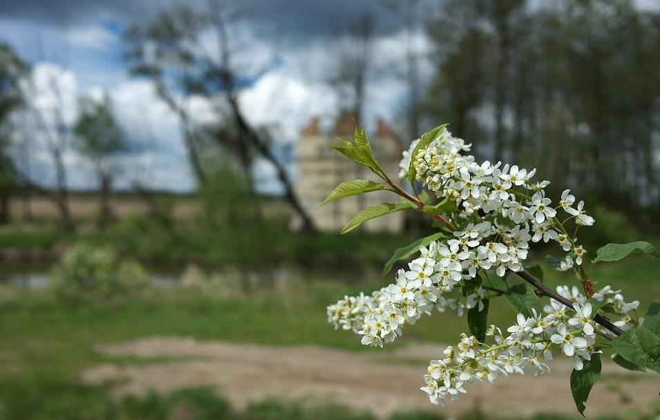 Przyłęk-Łąkietka