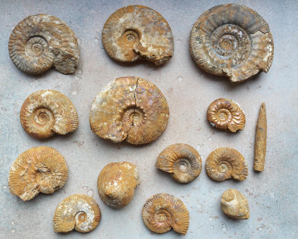 skamieniałości kelowej