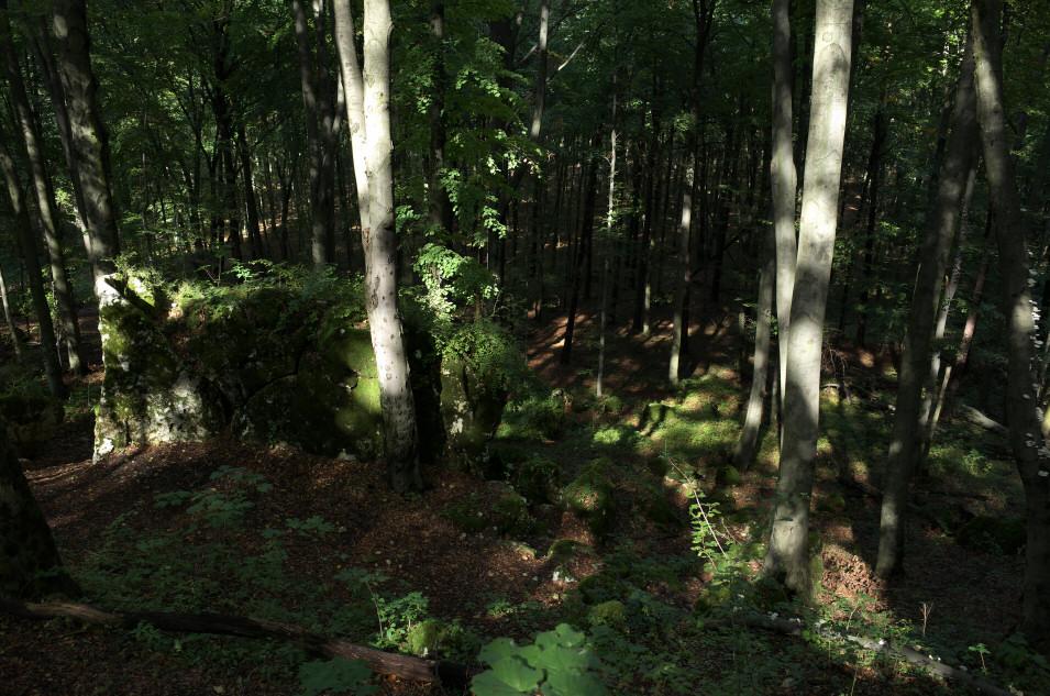rezerwat Sokole Góry