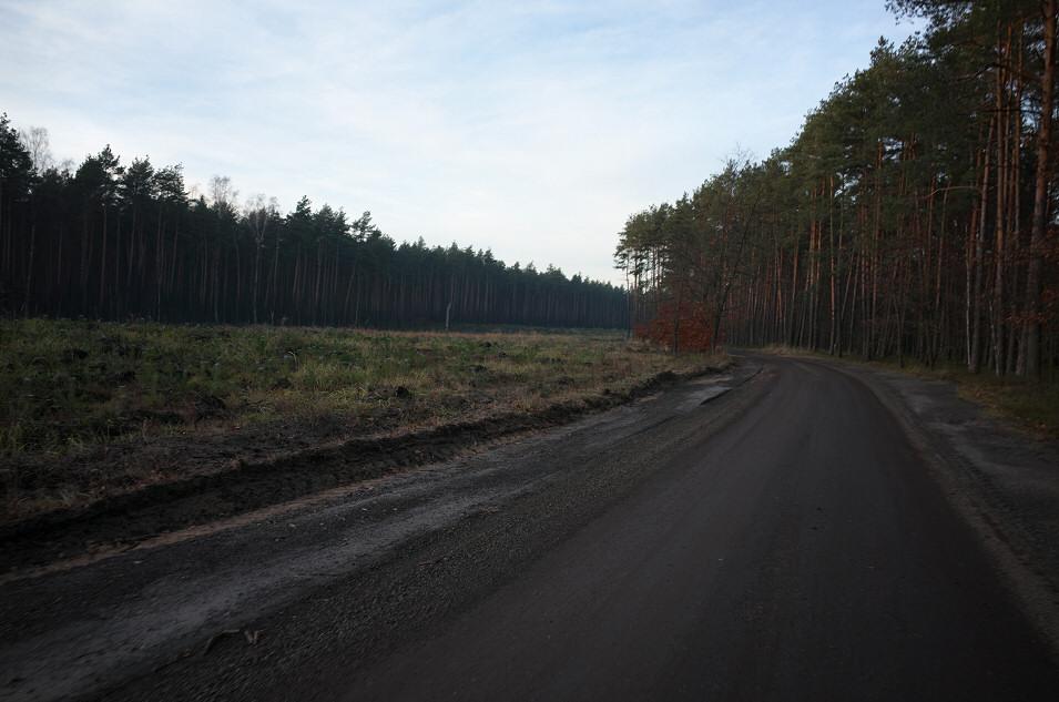 Lasy nad Brynicą