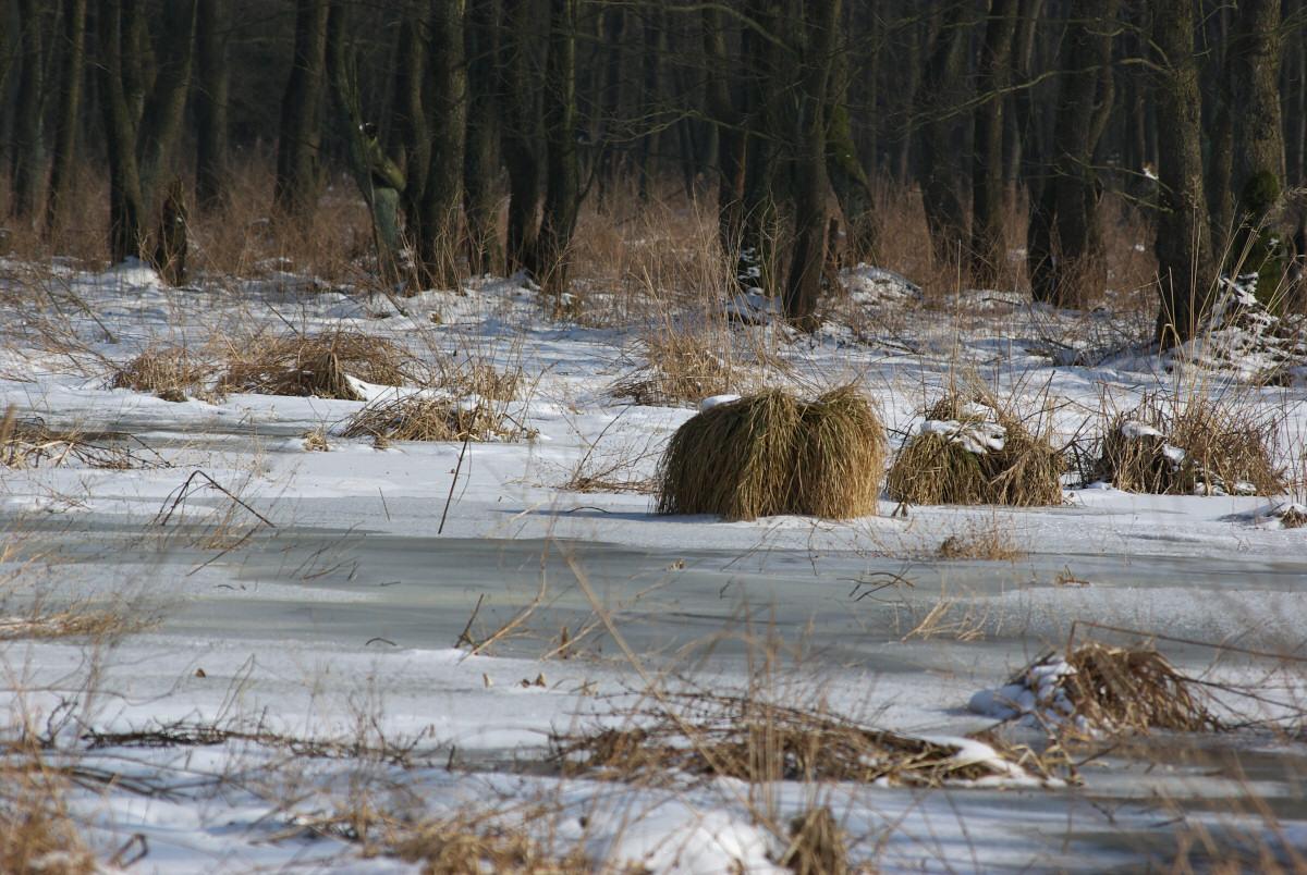 Przyroda okolic Włodowic