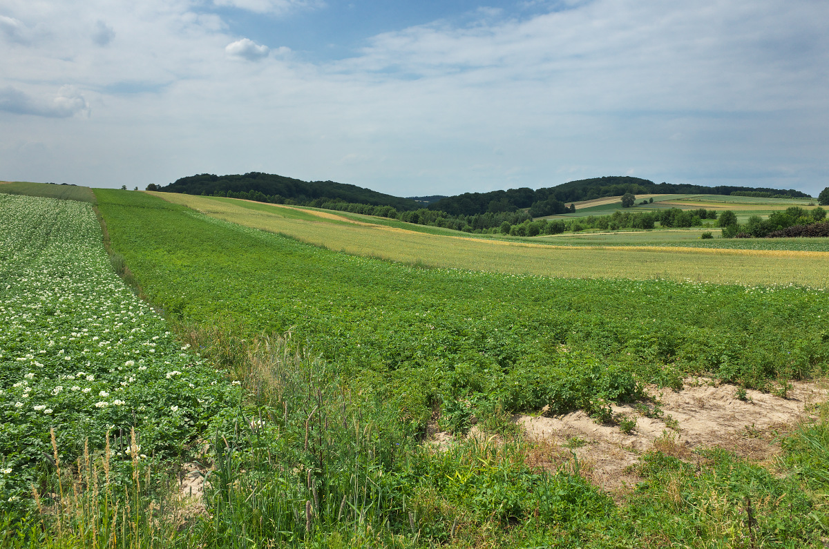Wzgórza Rabsztyńskie