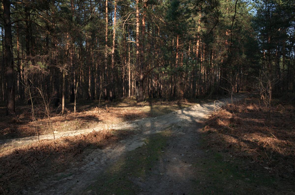 okolice Rzędkowic