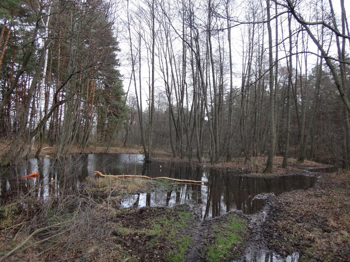 okolice Kostkowic