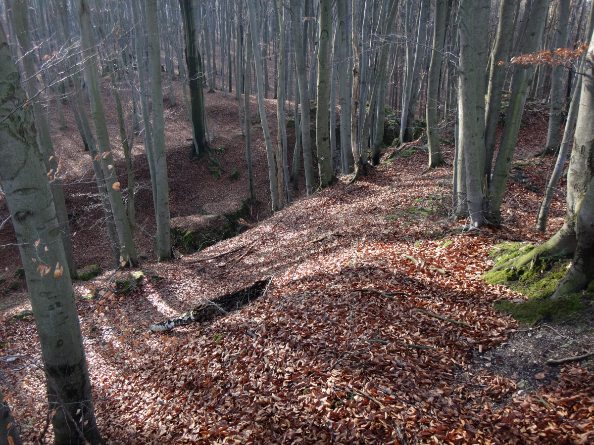 Dolina Wiercicy z przyległościami