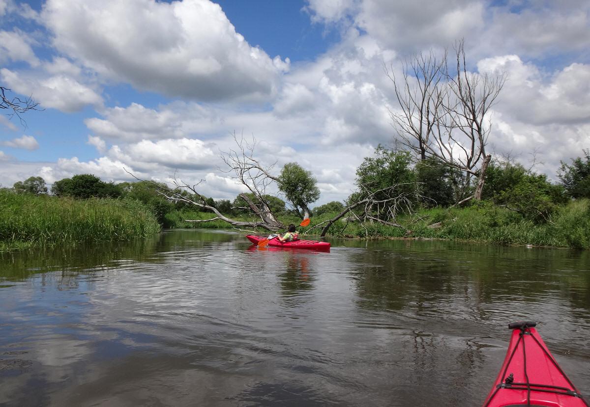 Spływ kajakowy Pilicą od Maluszyna