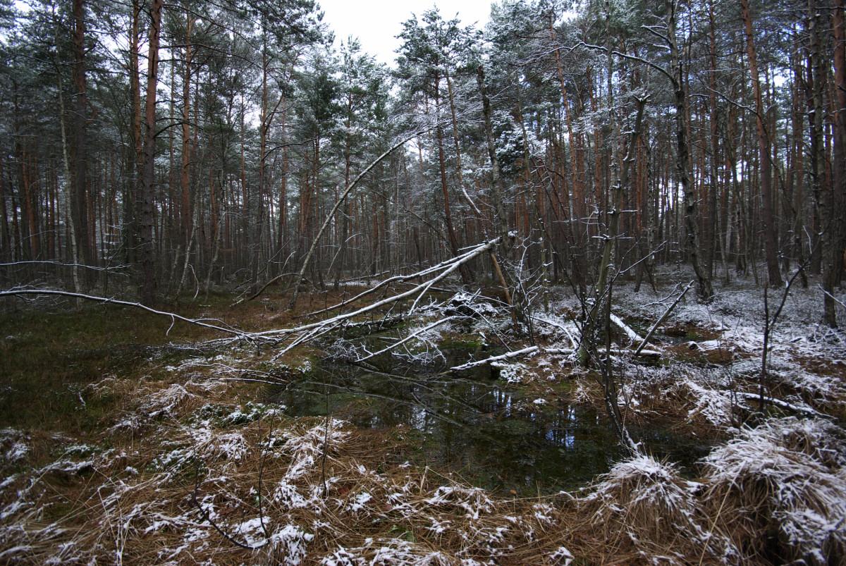 Lasy nad Górną Wartą