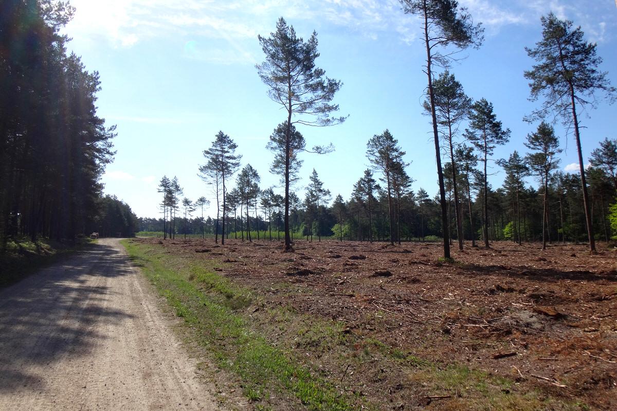 Las Michałowiec