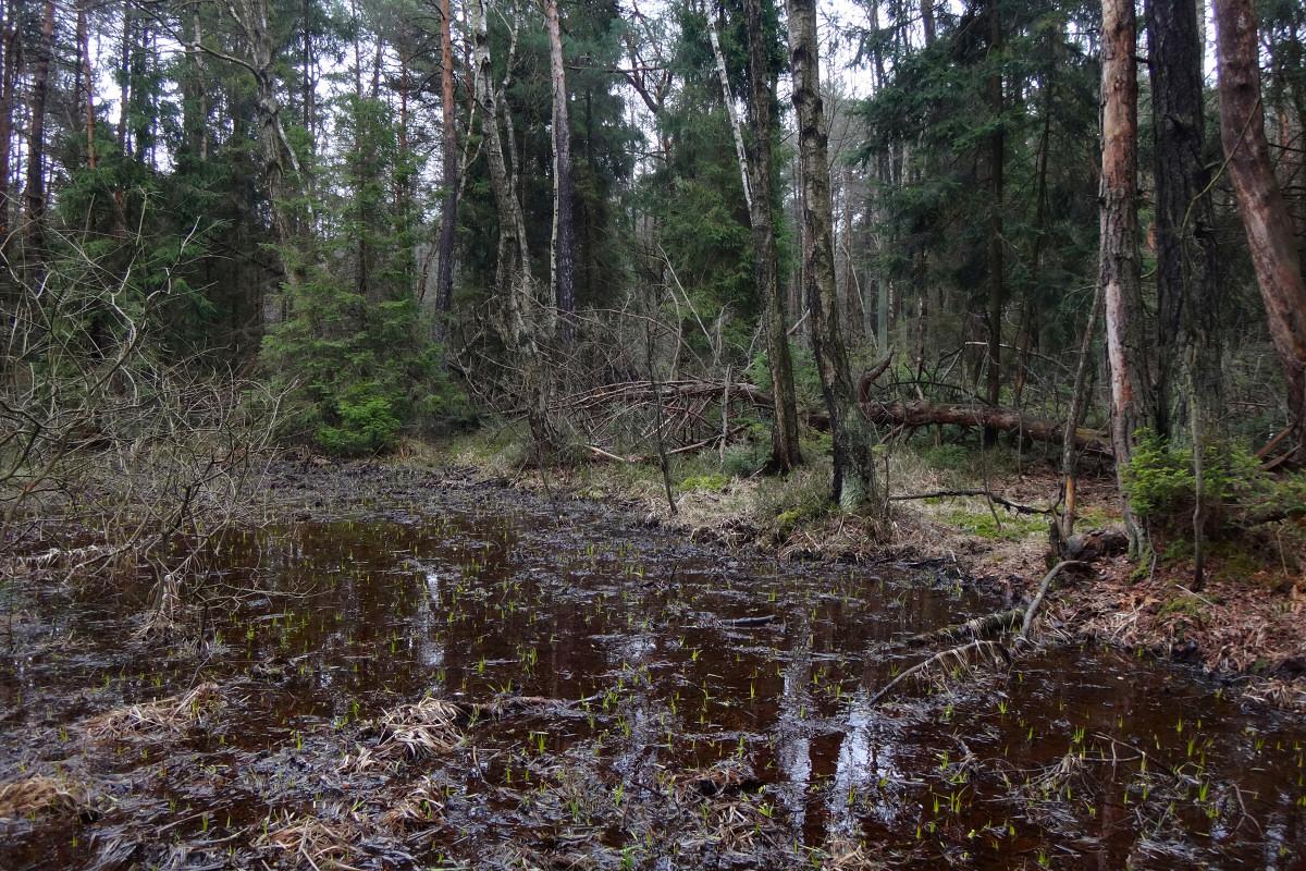 W widłach Budzisk i Parkoszowickiego Potoku